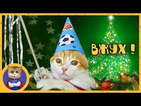 Кот Вжух исполняет ваши желания на Новый Год