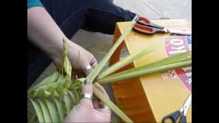 Vis: Pletenje palmica