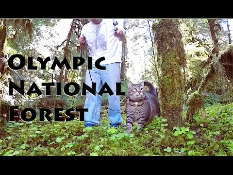 Wynoochie River Free Camping ~ Olympic National Forest