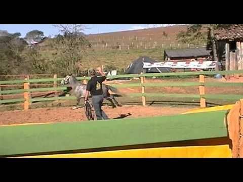1� Curso de Doma Racional - Rancho S�o Nicolau