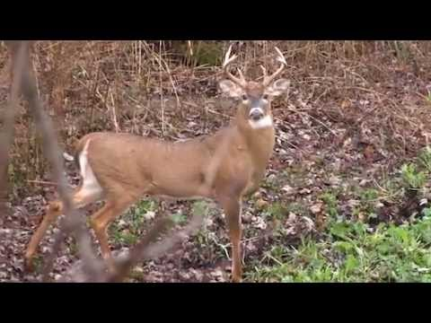 Michigan Deer Hunting: The Prerut is Picking Up