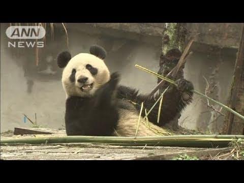 上野動物園にパンダ到着 約3年ぶりに一般公開へ(11/02/22)