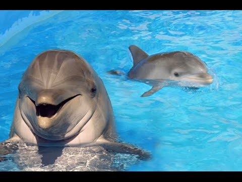 Dolphins having fun at SeaWorld