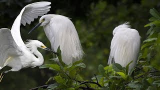 Beautiful Birds And Animals Video