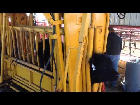 Big Iron Online Auctions, Trojan Hydraulic Livestock Chute