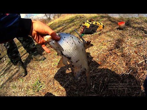 как ловить на канале рыбу
