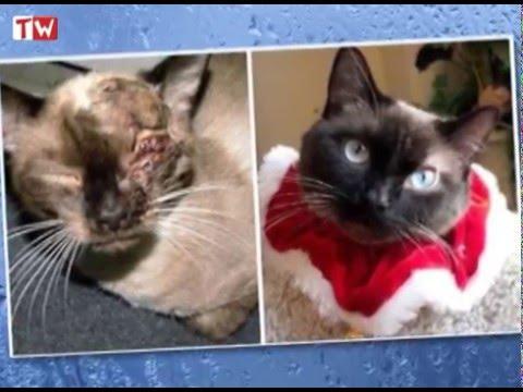 18 кошек до и после...