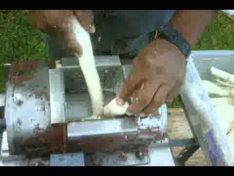 Processing Cassava In Bermuda 3
