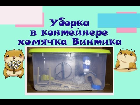 Уборка в контейнере хомячка Винтика | Уборка в клетке хомячка ❤️