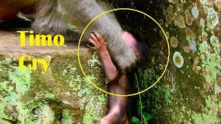 Pity poor baby Timo fall down in interval of stone,cried call mom help/Tima fast action to save baby