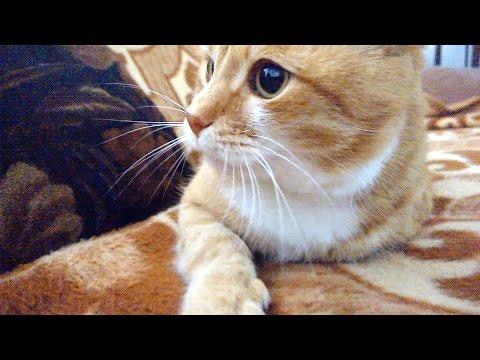 Understanding Cat Emotions