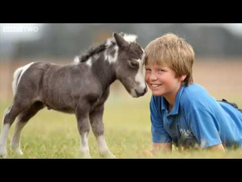 The smallest horse in the world ever - photo#12