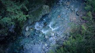 Blissful Tranquil Music & Forest Sounds | Calming River & Bird Sounds for Sleep, Meditation or Yoga