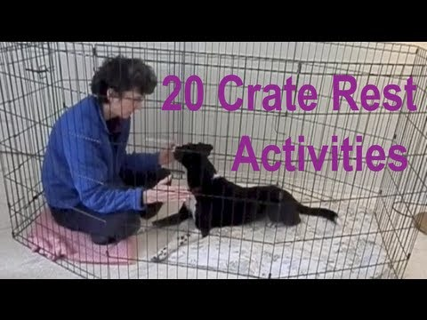 Introductory Crate Training Games for Dogs - Twin Cities ...