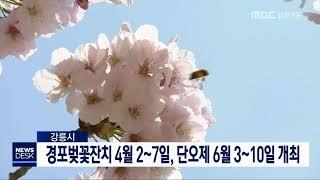 투/강릉 벚꽃잔치 4월 2~7일, 단오제 6월 3~10일 개최