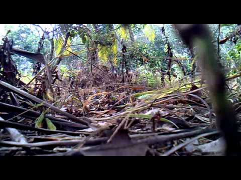 Burung Wak Wak Part 1 video