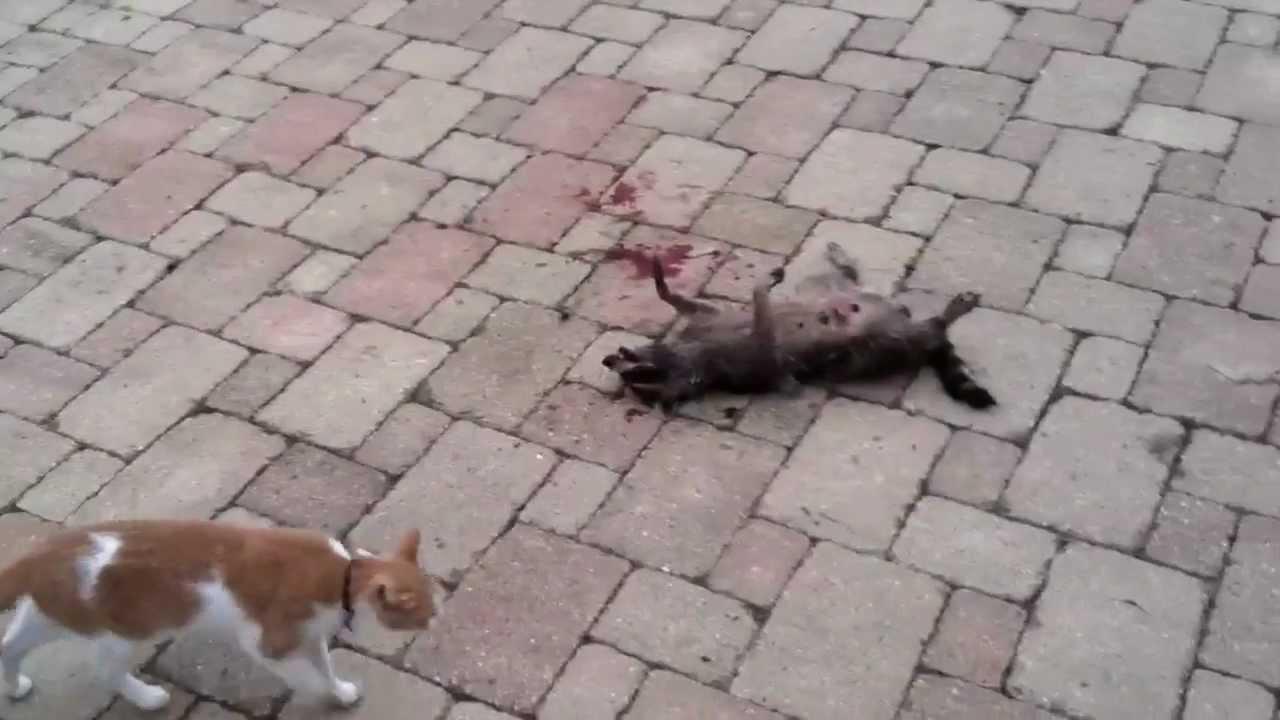 Can A Dog Kill A Cat