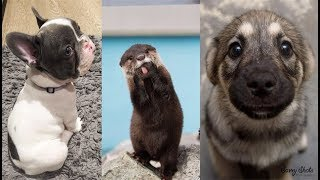 Cute baby animals Videos Compilation cute moment of the animals - Soo Cute! #5