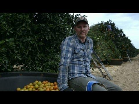Morgan Spurlock becomes a fruit picker