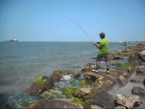 galveston fishing 2012 shark 5'