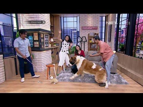 download lagu Jahilnya Andre Ngerjain Dua Anjing Saint Bernard Super Gede gratis