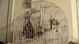 Watch Krizz Kaliko Lets Dip video