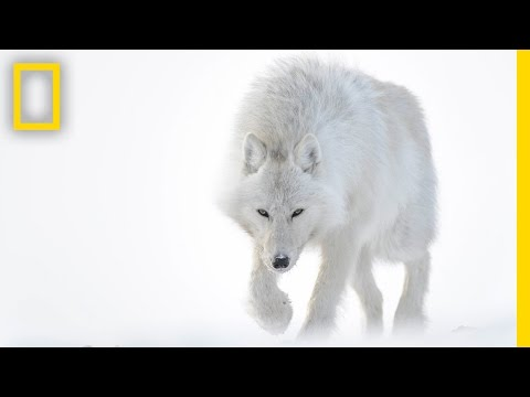 Photographer Captures Stunning Arctic Wildlife
