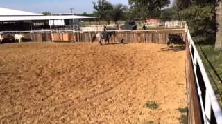 Bruiser- Jared Lesh cowhorses