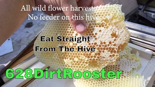 Can I Harvest Honey My First Year Beekeeping - Eat Honey Comb Straight From The Hive