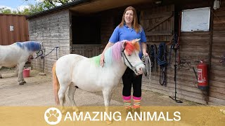 Woman Grooms Her Horses To Look Like Unicorns