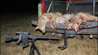Thermal coyote hunting