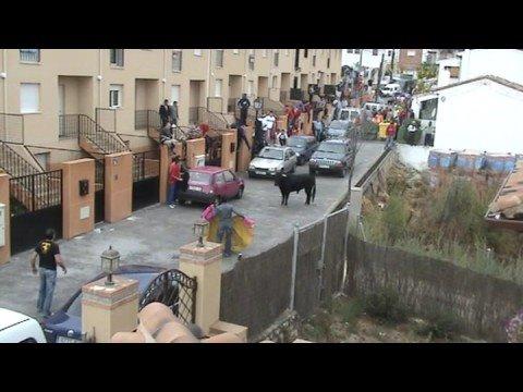 Que se ha escapado un toro !!!!!!!!!!!!!!!!! (II PARTE)