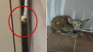 This Kitten Was Trapped Between A Building In Unbearable Heat – Until An Unlikely Rescuer Found Him
