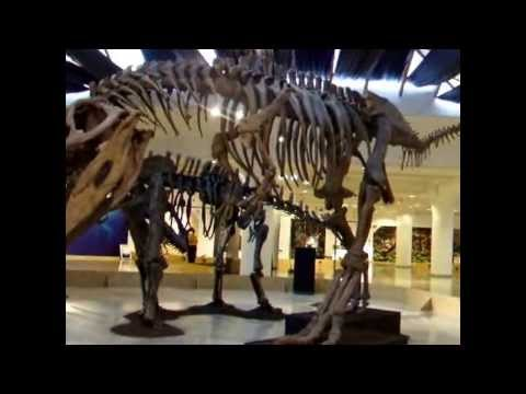 Patagónia óriásai - Argentin dinoszauruszok (technikai videó)