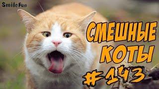 Приколы с котами – Смешные коты от SmileFun - ОЗВУЧКА КОТОВ - Funny Cats 2018