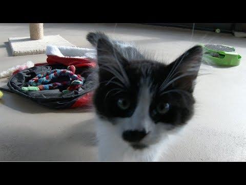 Lots Of Kittens!!