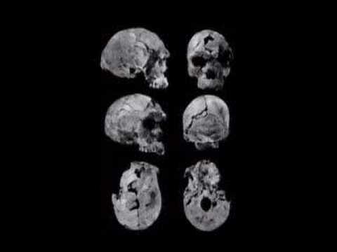 Chris Stringer on early human evolution1