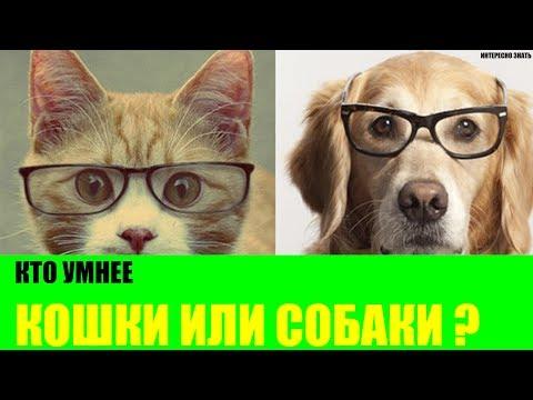 кто умнее кошки или собаки производителей современного термобелья