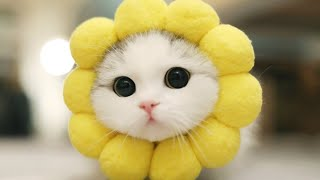 Baby Cats - Cute and Funny Cat Videos Compilation part 5