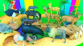 12 Incredible Wild Animals 3D Puzzle Surprise Zoo Toys Pygmy Hippopotamus Tapir Mouflon Tahr Ostrich
