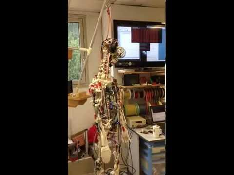 How to build a compliant humanoid robot – Self stabilising balance