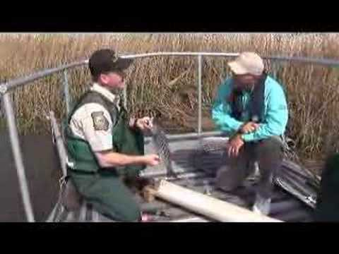 GA DNR Shockboat in Action