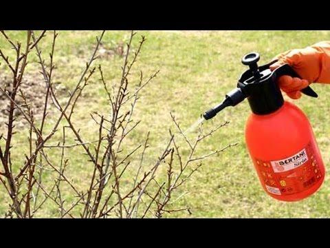 166. Опрыскивание сада весной.