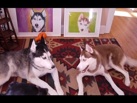 TALKING DOGS DEBATE ART! - SUBTITLED