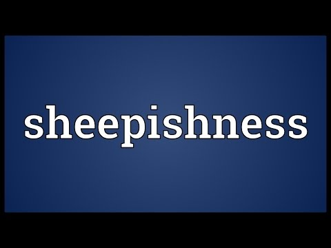 Header of sheepishness