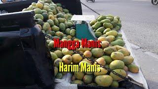 Download Lagu Mangga Harum Manis Perlis Harumanis Gratis STAFABAND
