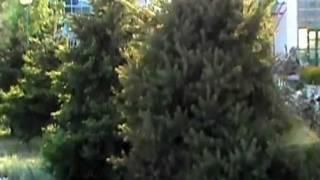 Анапа санаторий Кристалл 2011.mpg