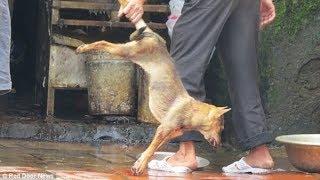 Hãi hùng ngành công nghiệp thịt chó của Việt Nam được đăng trên báo chí Anh