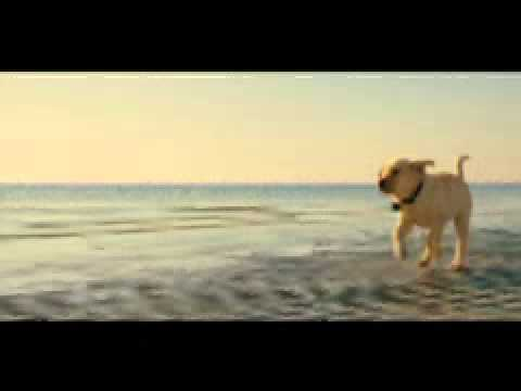 Marley & Me (2008) Trailer video