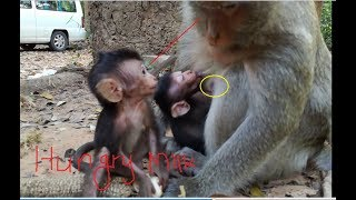 Mom why do not give me get milk, A cute newborn angry it's mom so hurt, It pity for new baby monkey